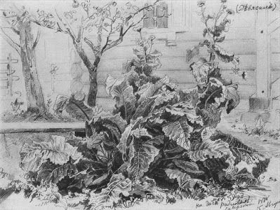 Shishkin's Burdock Drawing