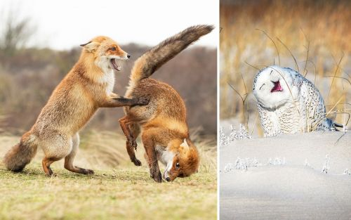 Comedy Wildlife Photography Awards Finalists Prove that Nature Has a Sense of Humor