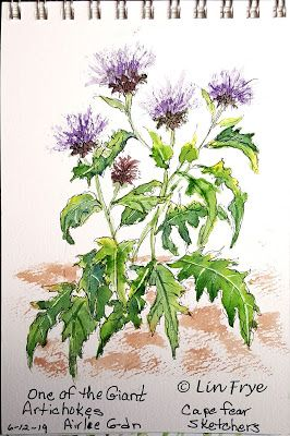 Journal - Airlie Gardens - Artichokes - Lin Frye - North Carolina