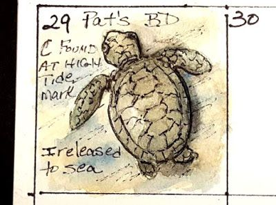 Journal - Baby Loggerhead - Smallie