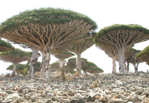 "Crossconnectmag: Isolated Island with Strange Plant Life is ""The"
