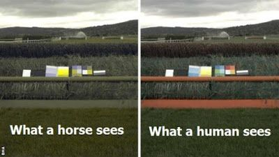 What colors can horses see?