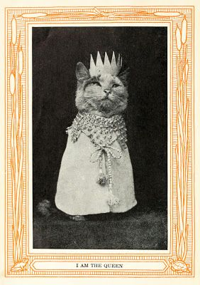 1911 Book of Funny Cat Pictures