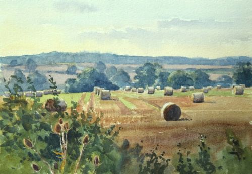 Teasels and Bales over the Welland Valley