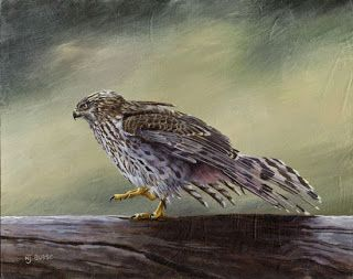 "Original Wildlife Bird Hawk Art Painting ""Rain Dance"" by Nancee Jean Busse, Painter of the American West"