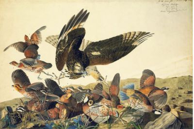 Today's birthday. John James Audubon