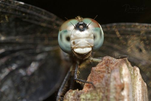 Spark Conservation with Backyard Photography