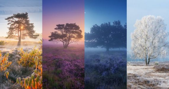 Photos of Dutch Heather Landscapes Through the Seasons