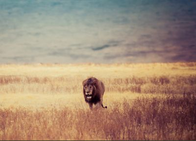 In Honor of Lions World Lion Day