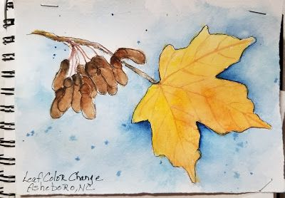 Travel journal- Leaf Color Change