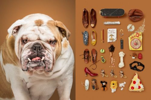 Photos of Dogs with Their Possessions