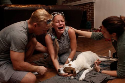 Heartbreaking Photos of Pet Owners Saying Goodbye to Their Dying Pets