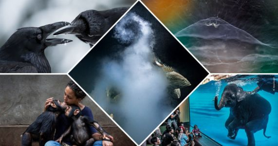 Winning Photos from the Wildlife Photographer of the Year 2021 Awards