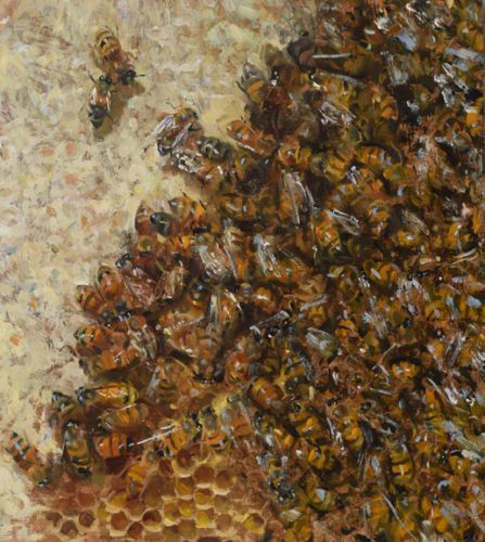Bees Capping Honey