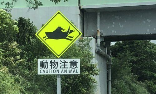 Wild boar warning