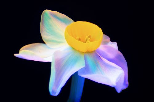 Macro Photographs of Ultraviolet Lit Flowers Display a Dazzling Array of Neon Colors