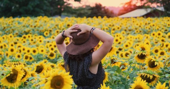 Sunflower Farms Are Being Trampled by Instagram 'Zombie Apocalypse'