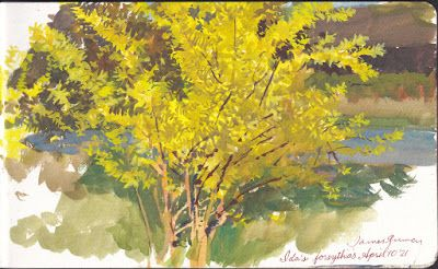 Painting Forsythia Flowers