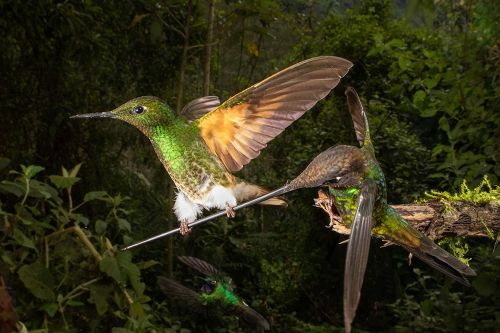 A Dozing Owl and Tussling Hummingbirds Top the 2020 Bird Photographer of the Year Competition