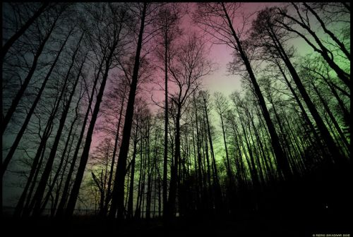 Colorful Night in the Forest