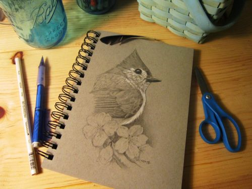 Study of a Tufted Titmouse