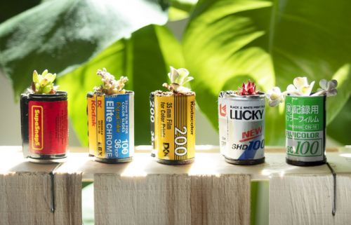 You Can Grow Plants in Used Film Canisters