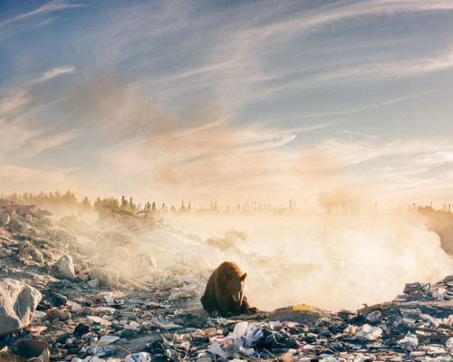 This Photo of a Bear in a Dump Brought the Photographer to Tears