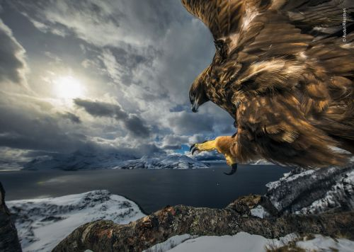 Stunning Shots Take Top Prizes in the 2019 Natural History Museum Wildlife Photographer of the Year Contest