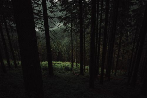 Theonlymagicleftisart: Dark Woods,Petr Klempa Check out these