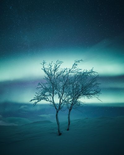 Majestic Trees in Serene Finnish Landscapes Photographed by Mikko Lagerstedt