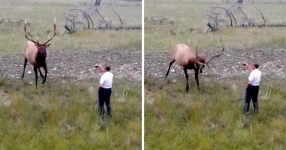 How NOT to Photograph an Elk