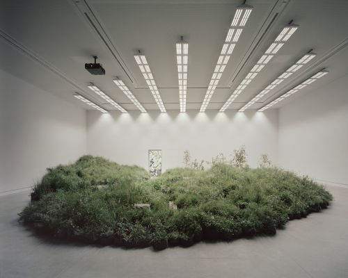 Indoor Installation of 10,000 Plants Considers Relationship Between Endangered Australian Grasslands and Architecture