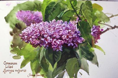 Painting the Common Lilac