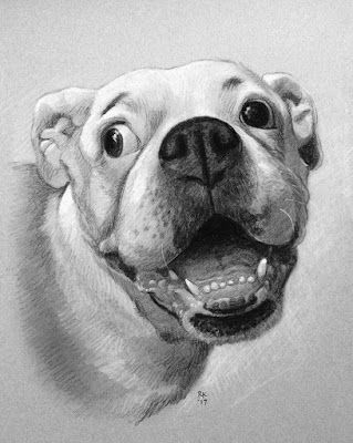 Day 29 - A Pencil Pet Portrait Commission, and Special Offer!