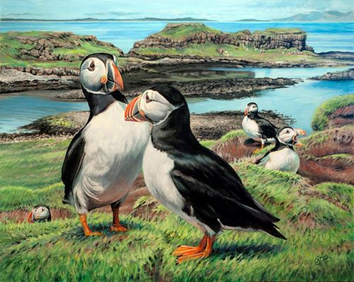 Lunga Puffins by Rebecca Zook
