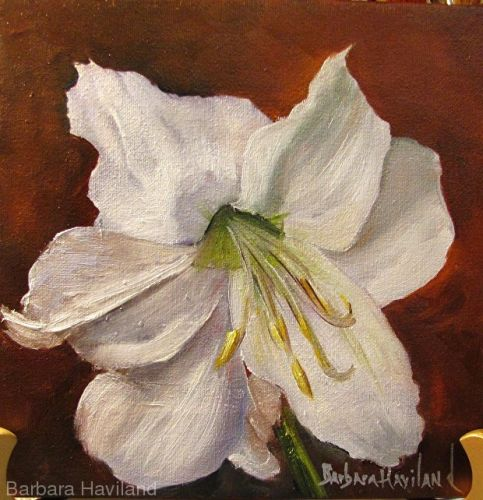White Amaryllis,floral,oils canvas,Barbara Havilad