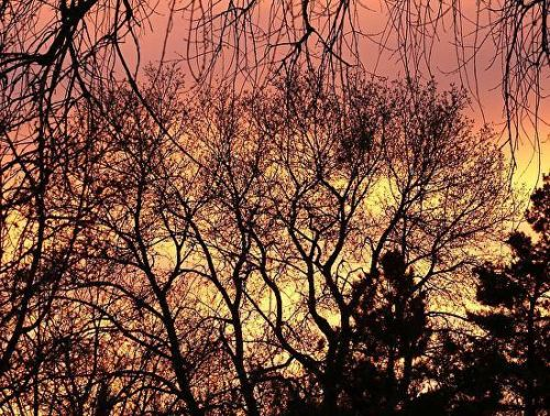 """Fine Art Photography, Trees, Sunset """"Bare Naked Branches"""" by International Photographer Kit Hedman"""
