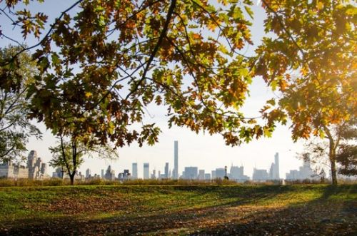Cities Should Think of Trees as Public Health Infrastructure