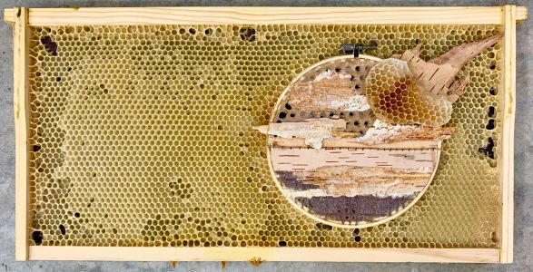 Honey Bees Complete Mixed Media Artworks by Building Comb Around Embroidery Hoops