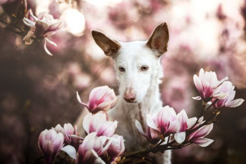 23 of the Best Dog Photos of 2019