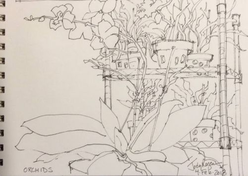 """Day 124 """"Orchids"""" 6 x 9 pen & ink"""