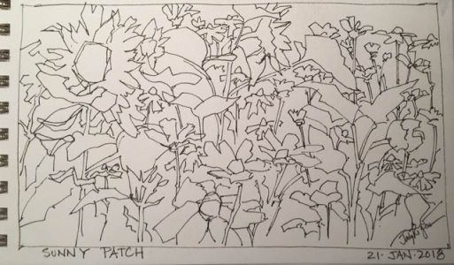 "Day 111 ""Sunny Patch"" pen&ink 5 x 9"