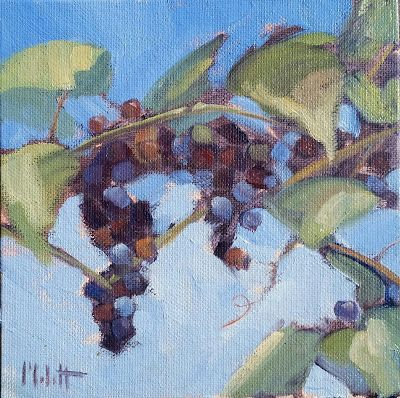 Vineyard Art Original Oil Painting Heidi Malott