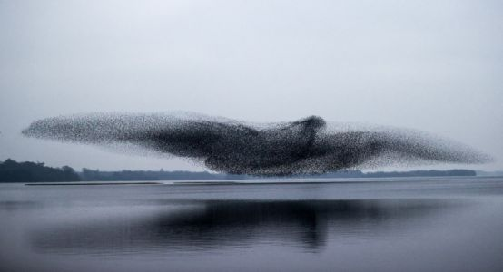Photographer Captures Stunning Bird-Shaped Starling Murmuration
