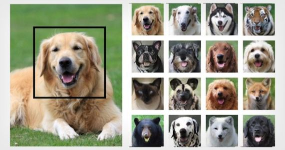 NVIDIA AI Can Turn Your Pet Into Other Animals