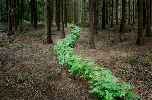 Temporary Installations Create Winding Paths Through a Forest in the South of England