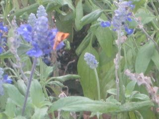 Butterfly Telling The Flowers - Photographic Proof