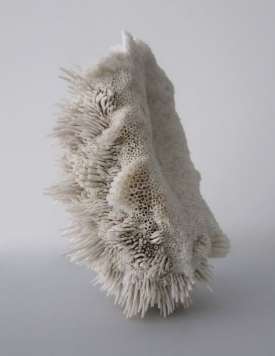 New Textural Sculptures Made With Swirls of Seashells by Rowan Mersh