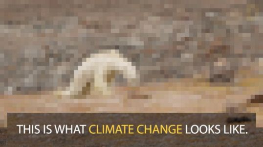 Nat Geo: We Went 'Too Far' in Linking Starving Polar Bear to Climate Change