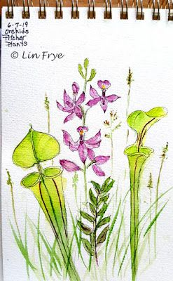 Pitcher Plants and Orchids - Lin Frye - North Carolina
